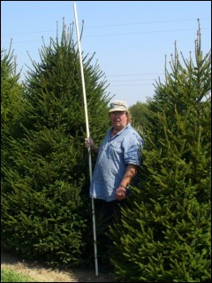 9'-10' Norway Spruce